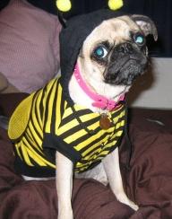 Beedog