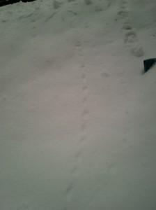 Snowball tracks