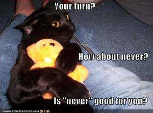 Funny-pictures-cat-hugs-teddy-bear-jealously