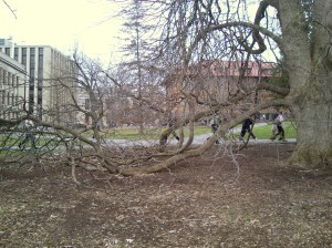 Crazy tree with buried branches.