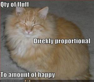 Funny-pictures-happy-fluffy-orange-cat