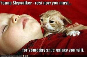Funny-pictures-yoda-cat-baby-sleeps