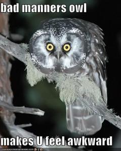 awkward-owl